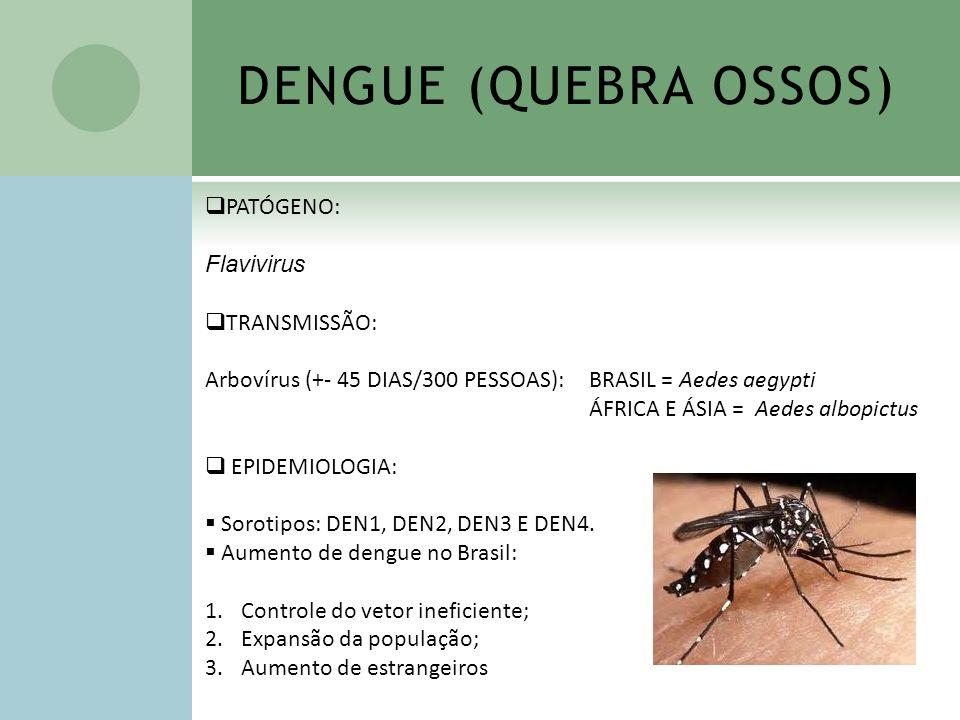 DENGUE (QUEBRA OSSOS) PATÓGENO: Flavivirus TRANSMISSÃO: Arbovírus (+- 45 DIAS/300 PESSOAS): BRASIL = Aedes aegypti ÁFRICA E ÁSIA = Aedes albopictus EP