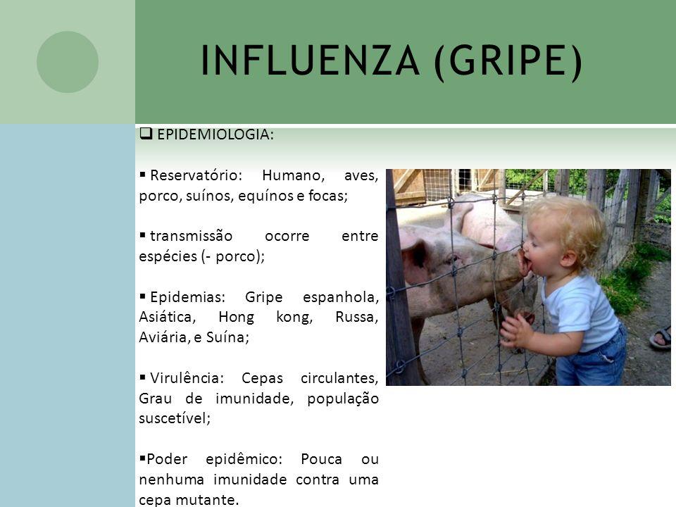 INFLUENZA (GRIPE) EPIDEMIOLOGIA: Reservatório: Humano, aves, porco, suínos, equínos e focas; transmissão ocorre entre espécies (- porco); Epidemias: G