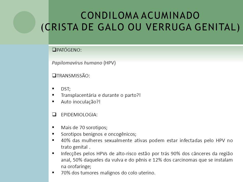 CONDILOMA ACUMINADO (CRISTA DE GALO OU VERRUGA GENITAL) PATÓGENO: Papilomavírus humano (HPV) TRANSMISSÃO: DST; Transplacentária e durante o parto?! Au