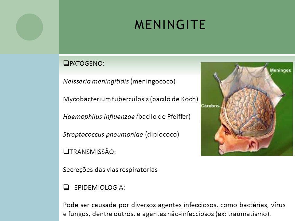 MENINGITE PATÓGENO: Neisseria meningitidis (meningococo) Mycobacterium tuberculosis (bacilo de Koch) Haemophilus influenzae (bacilo de Pfeiffer) Strep
