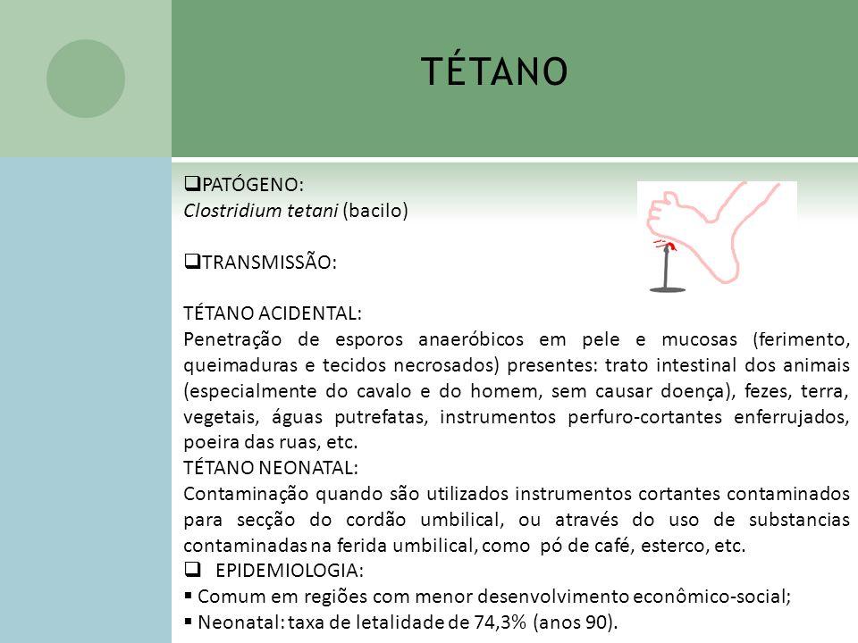 TÉTANO PATÓGENO: Clostridium tetani (bacilo) TRANSMISSÃO: TÉTANO ACIDENTAL: Penetração de esporos anaeróbicos em pele e mucosas (ferimento, queimadura