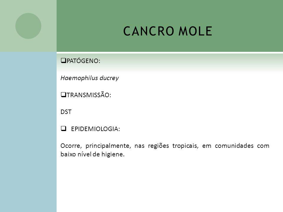 CANCRO MOLE PATÓGENO: Haemophilus ducrey TRANSMISSÃO: DST EPIDEMIOLOGIA: Ocorre, principalmente, nas regiões tropicais, em comunidades com baixo nível