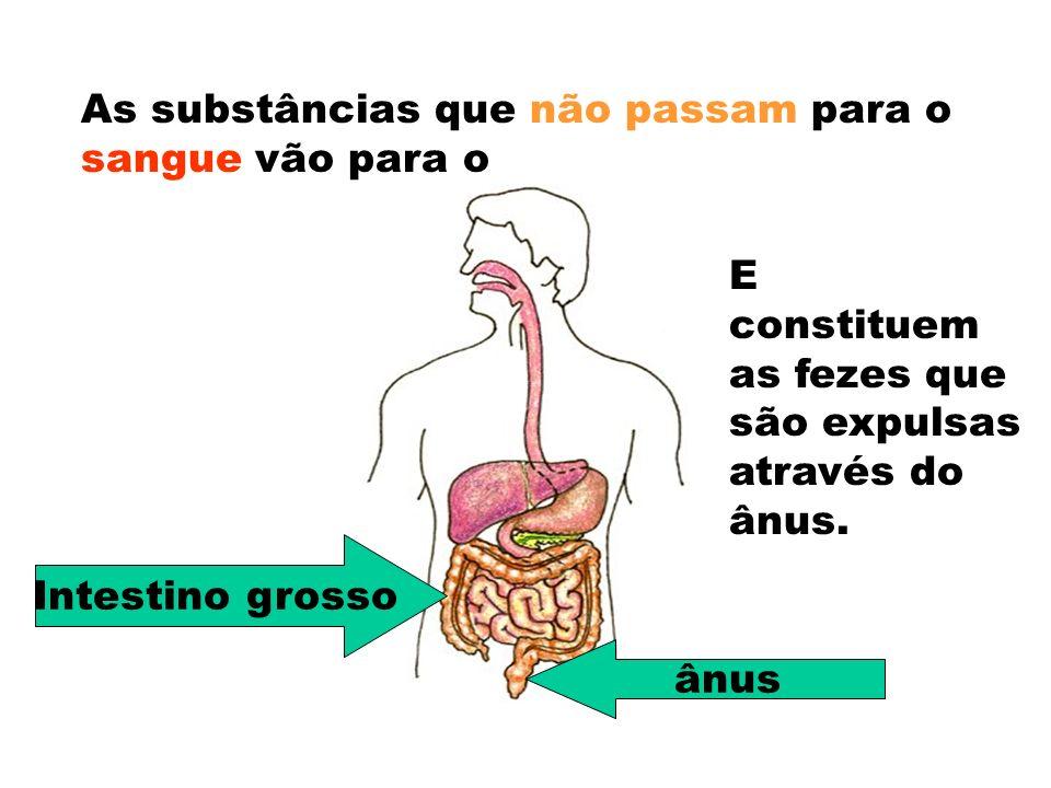 As substâncias que não passam para o sangue vão para o Intestino grosso E constituem as fezes que são expulsas através do ânus.
