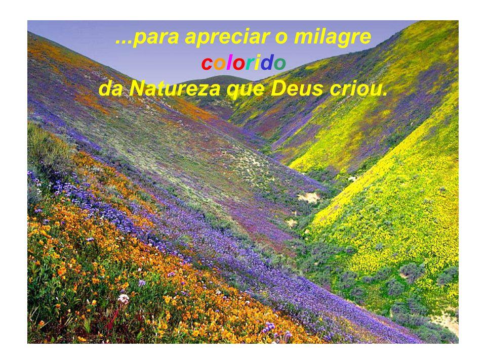...para apreciar o milagre colorido da Natureza que Deus criou.