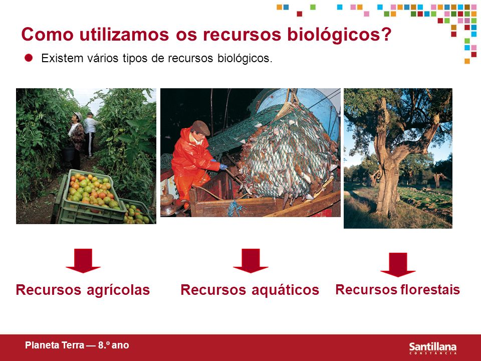 Como utilizamos os recursos biológicos? Existem vários tipos de recursos biológicos. Recursos agrícolas Planeta Terra 8.º ano Recursos aquáticos Recur