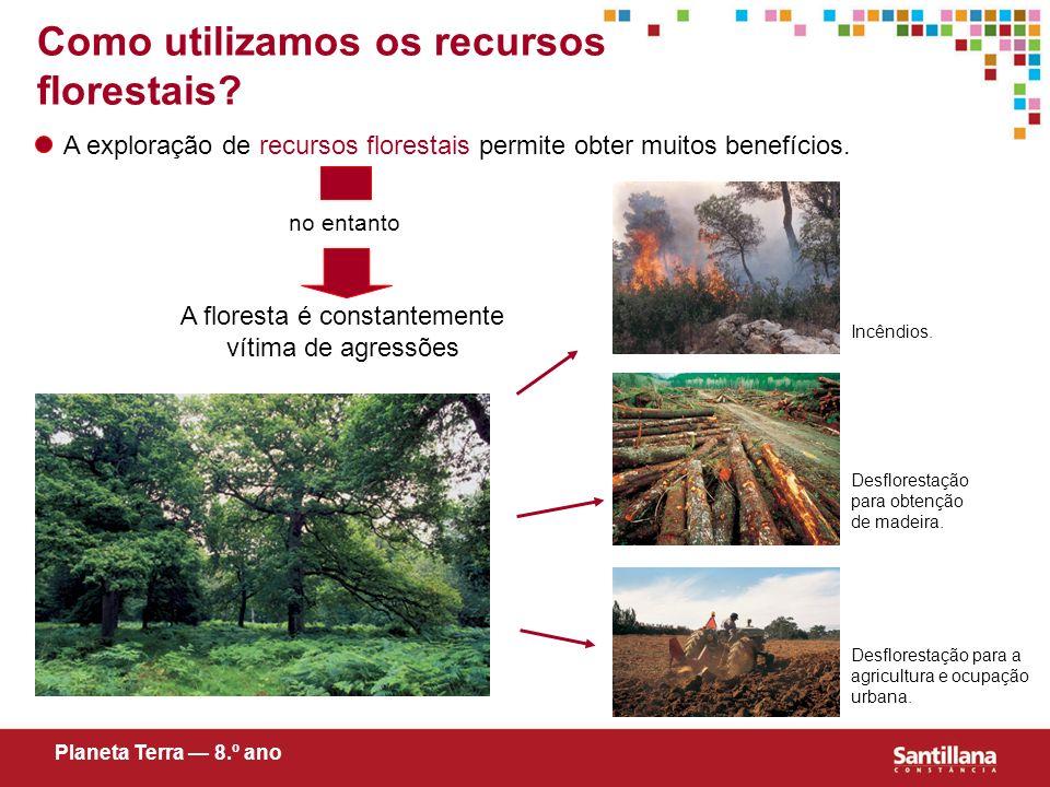 A floresta é constantemente vítima de agressões no entanto Incêndios. Desflorestação para obtenção de madeira. Desflorestação para a agricultura e ocu