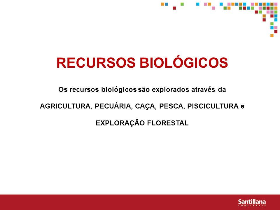 RECURSOS BIOLÓGICOS Os recursos biológicos são explorados através da AGRICULTURA, PECUÁRIA, CAÇA, PESCA, PISCICULTURA e EXPLORAÇÂO FLORESTAL