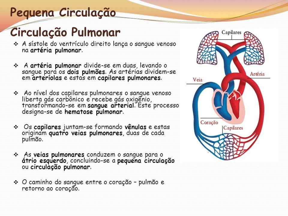 Pequena Circulação Circulação Pulmonar A sístole do ventrículo direito lança o sangue venoso na artéria pulmonar. A artéria pulmonar divide-se em duas