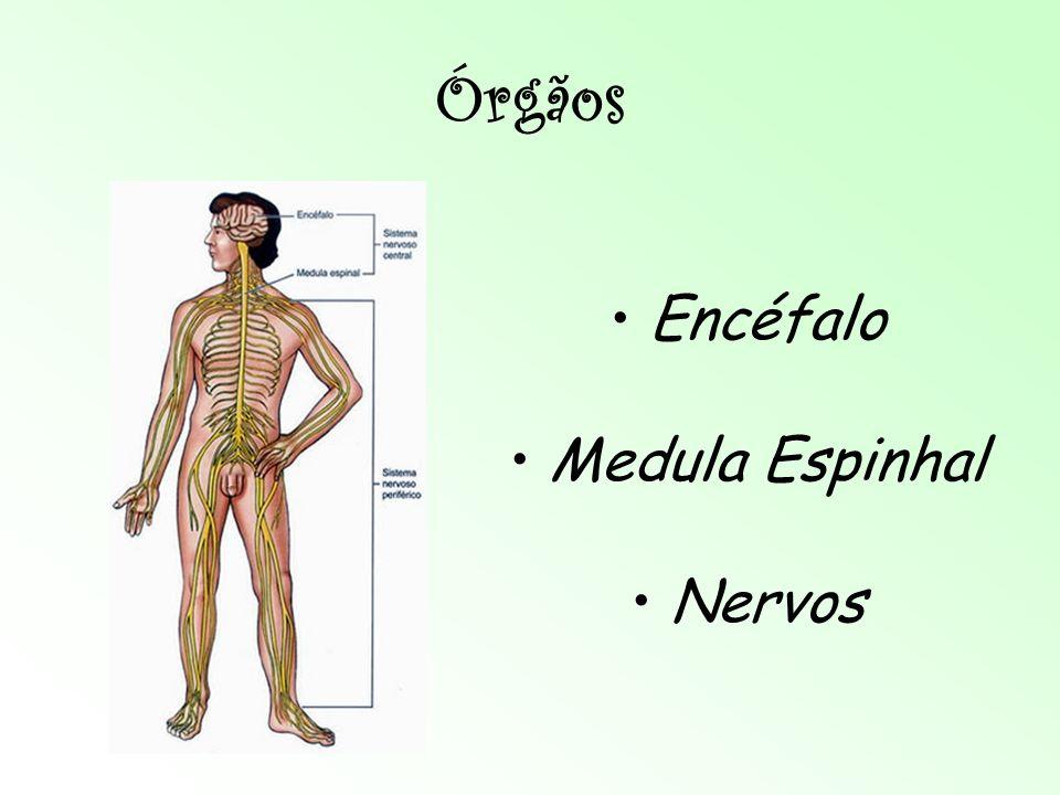 Sistema Nervoso Eduardo, Isabela, Júlia e Nícolas