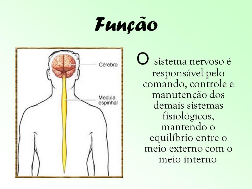 Órgãos Encéfalo Medula Espinhal Nervos