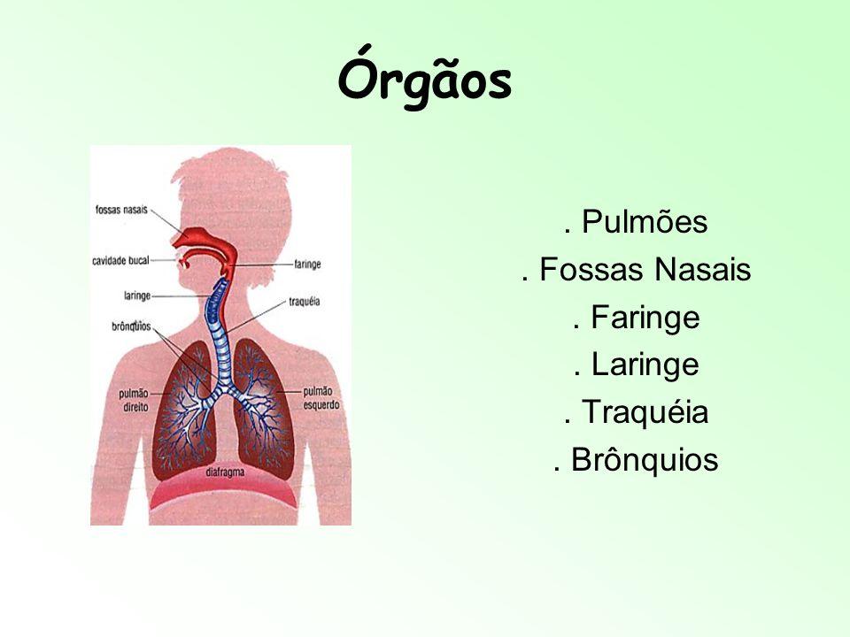 Sistema Respiratório Juliana, Mariana V., Marina G. e Yanny