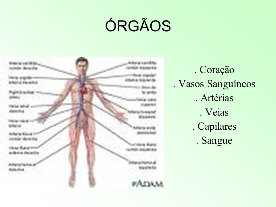 Sistema Circulatório Bruno,Edmur,Renan e Victor Bahu
