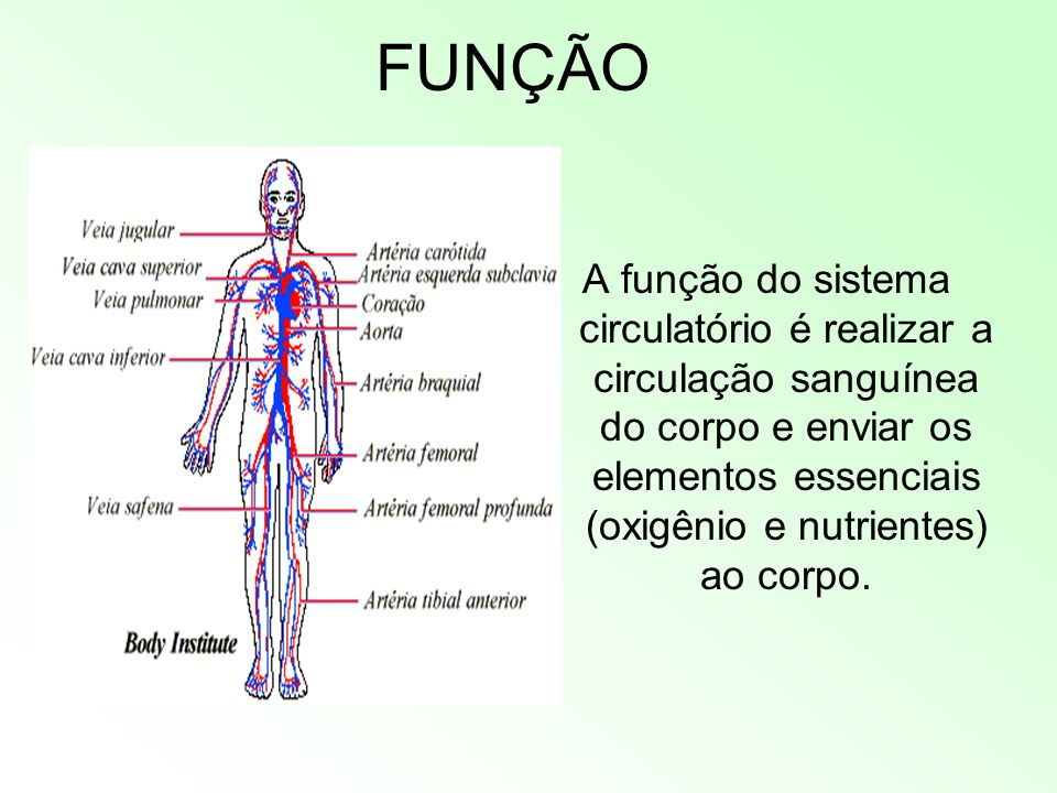 FUNÇÃO A função do sistema circulatório é realizar a circulação sanguínea do corpo e enviar os elementos essenciais (oxigênio e nutrientes) ao corpo.