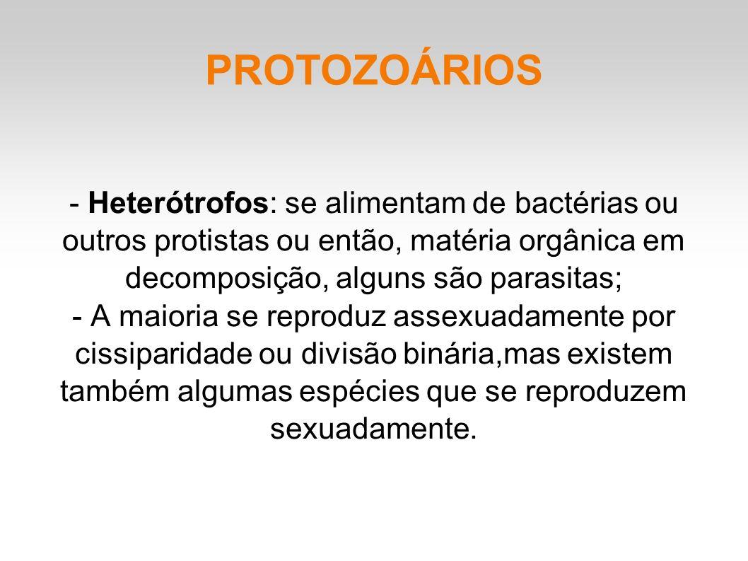 PROTOZOÁRIOS - Heterótrofos: se alimentam de bactérias ou outros protistas ou então, matéria orgânica em decomposição, alguns são parasitas; - A maioria se reproduz assexuadamente por cissiparidade ou divisão binária,mas existem também algumas espécies que se reproduzem sexuadamente.