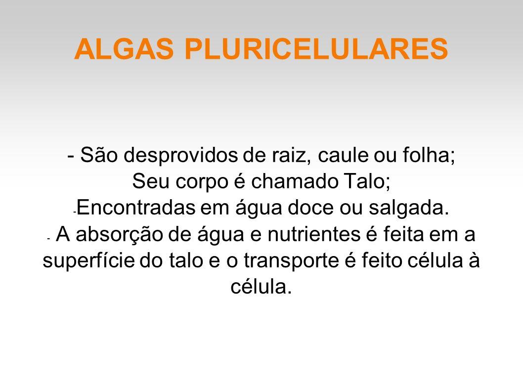 ALGAS PLURICELULARES - São desprovidos de raiz, caule ou folha; Seu corpo é chamado Talo; - Encontradas em água doce ou salgada.