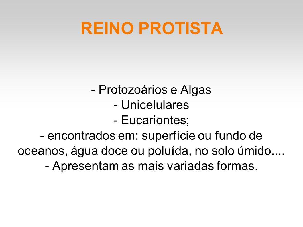 REINO PROTISTA - Protozoários e Algas - Unicelulares - Eucariontes; - encontrados em: superfície ou fundo de oceanos, água doce ou poluída, no solo úmido....
