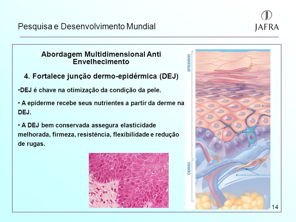 14 Pesquisa e Desenvolvimento Mundial Abordagem Multidimensional Anti Envelhecimento 4. Fortalece junção dermo-epidérmica (DEJ) DEJ é chave na otimiza