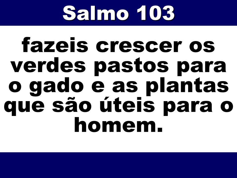 fazeis crescer os verdes pastos para o gado e as plantas que são úteis para o homem. Salmo 103