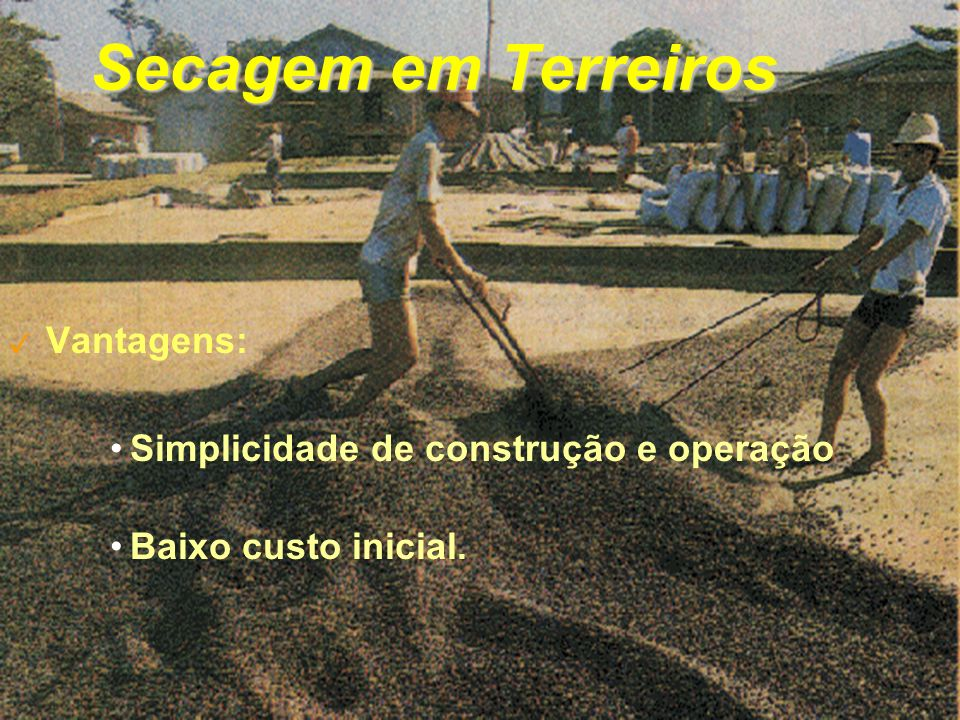 Secagem em Terreiros 3 Vantagens: Simplicidade de construção e operação Baixo custo inicial.