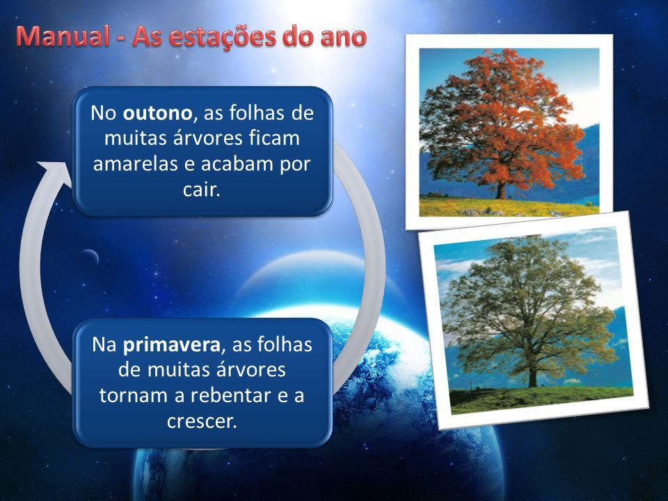 No outono, as folhas de muitas árvores ficam amarelas e acabam por cair. Na primavera, as folhas de muitas árvores tornam a rebentar e a crescer.