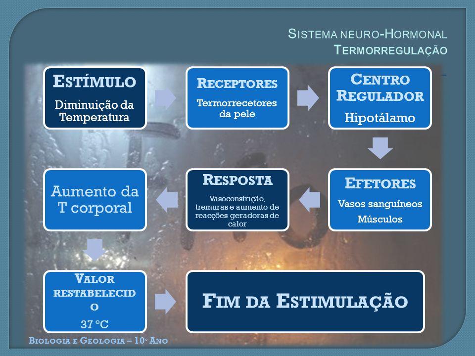 B IOLOGIA E G EOLOGIA – 10 º A NO E STÍMULO Diminuição da Temperatura R ECEPTORES Termorrecetores da pele C ENTRO R EGULADOR Hipotálamo E FETORES Vasos sanguíneos Músculos R ESPOSTA Vasoconstrição, tremuras e aumento de reacções geradoras de calor Aumento da T corporal V ALOR RESTABELECID O 37 ºC F IM DA E STIMULAÇÃO