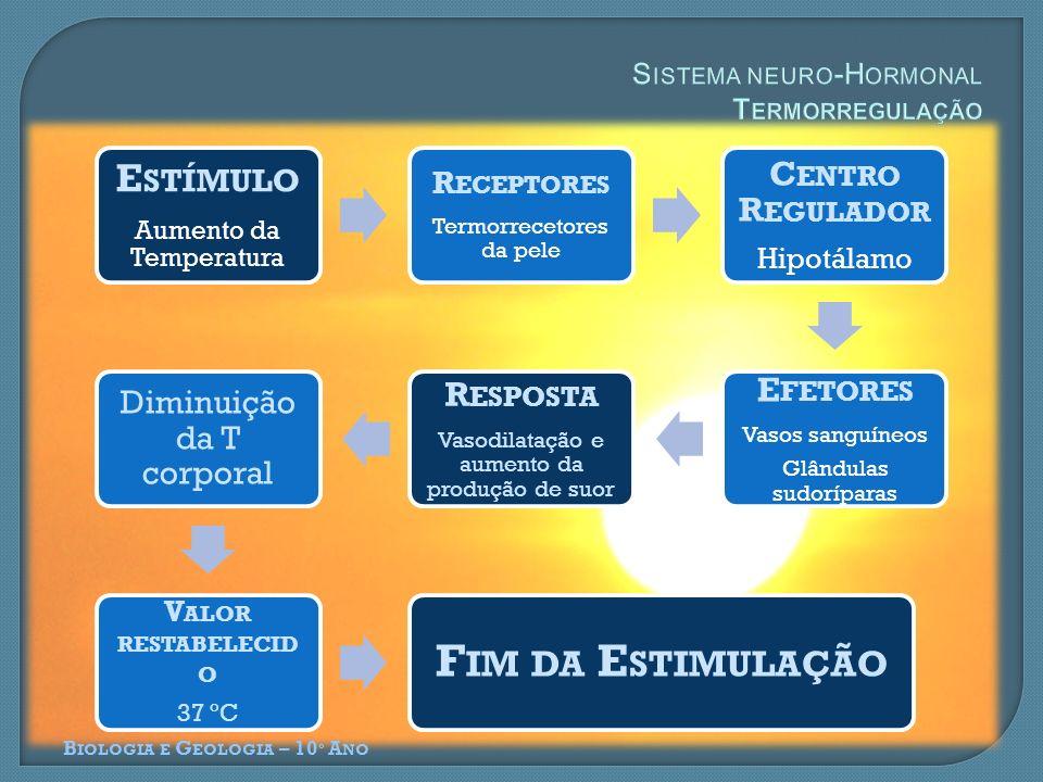 B IOLOGIA E G EOLOGIA – 10 º A NO E STÍMULO Aumento da Temperatura R ECEPTORES Termorrecetores da pele C ENTRO R EGULADOR Hipotálamo E FETORES Vasos sanguíneos Glândulas sudoríparas R ESPOSTA Vasodilatação e aumento da produção de suor Diminuição da T corporal V ALOR RESTABELECID O 37 ºC F IM DA E STIMULAÇÃO