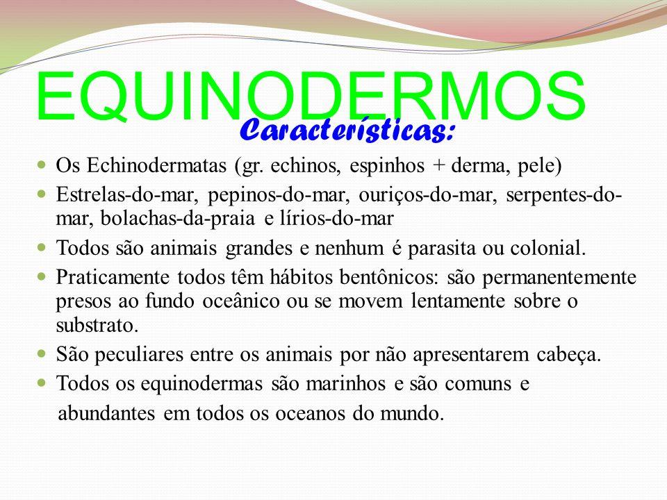 EQUINODERMOS Características: Os Echinodermatas (gr.