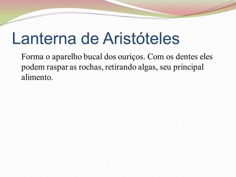 Lanterna de Aristóteles Forma o aparelho bucal dos ouriços.
