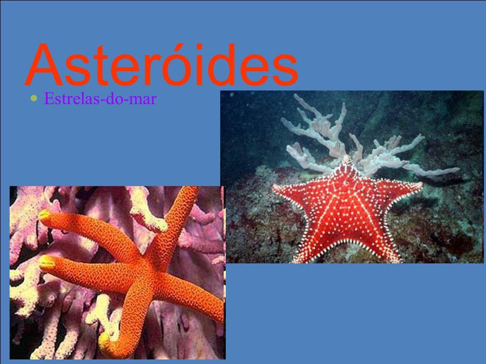 Asteróides Estrelas-do-mar