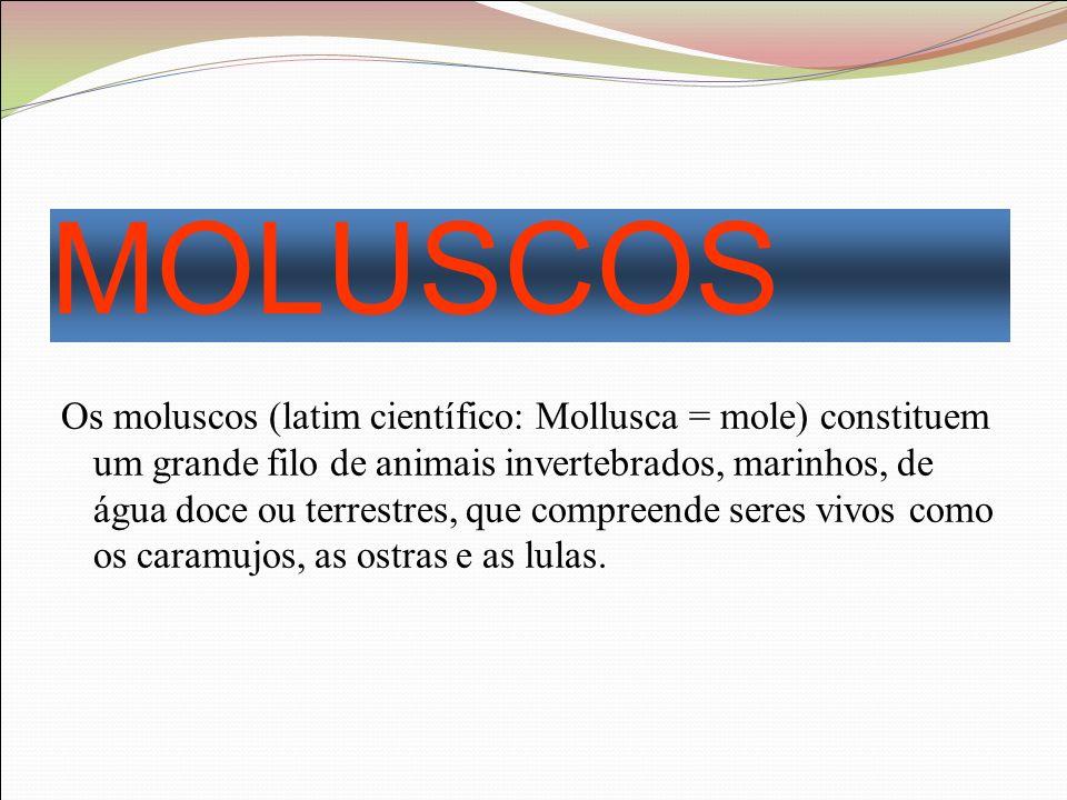 MOLUSCOS Os moluscos (latim científico: Mollusca = mole) constituem um grande filo de animais invertebrados, marinhos, de água doce ou terrestres, que compreende seres vivos como os caramujos, as ostras e as lulas.