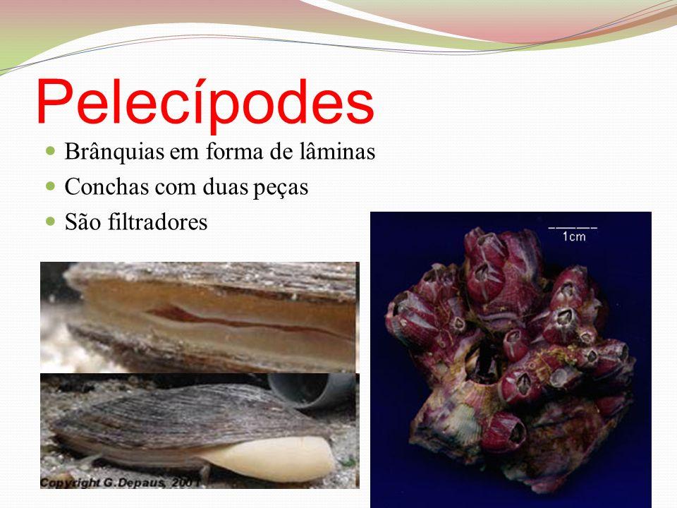 Pelecípodes Brânquias em forma de lâminas Conchas com duas peças São filtradores