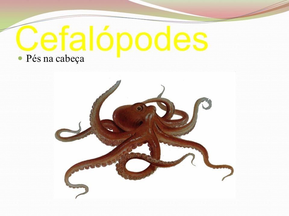 Cefalópodes Pés na cabeça
