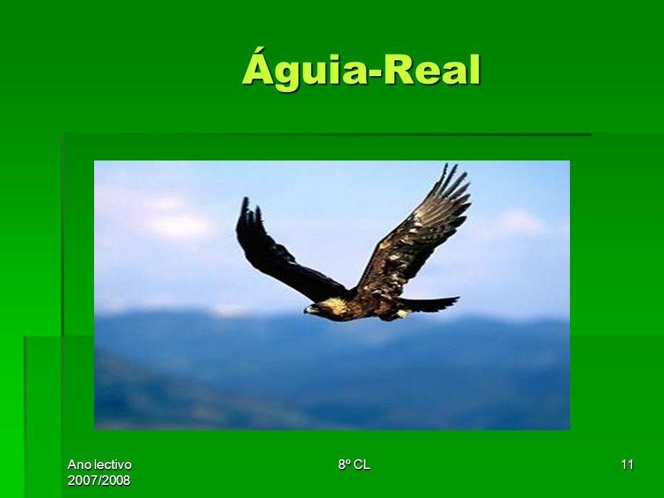 Ano lectivo 2007/2008 8º CL11 Águia-Real Águia-Real