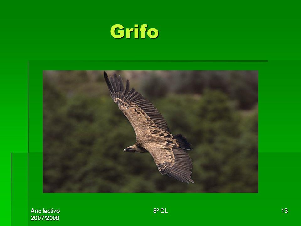 Ano lectivo 2007/2008 8º CL13 Grifo Grifo