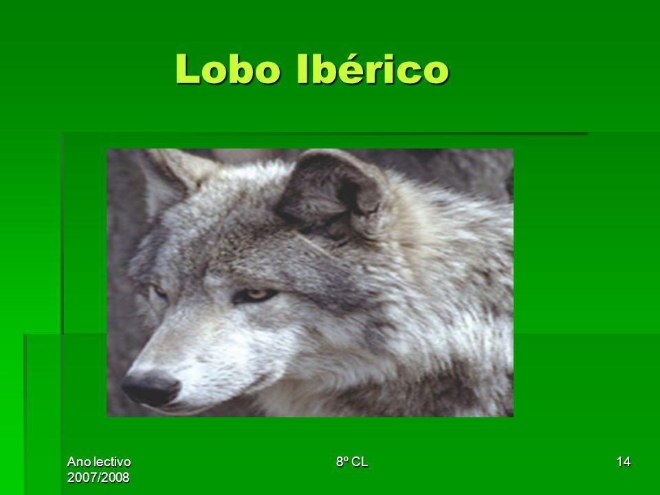 Ano lectivo 2007/2008 8º CL14 Lobo Ibérico Lobo Ibérico