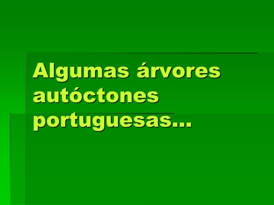Algumas árvores autóctones portuguesas...
