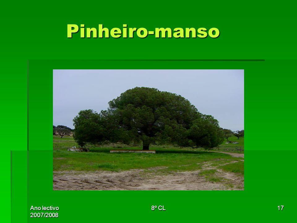Ano lectivo 2007/2008 8º CL17 Pinheiro-manso Pinheiro-manso