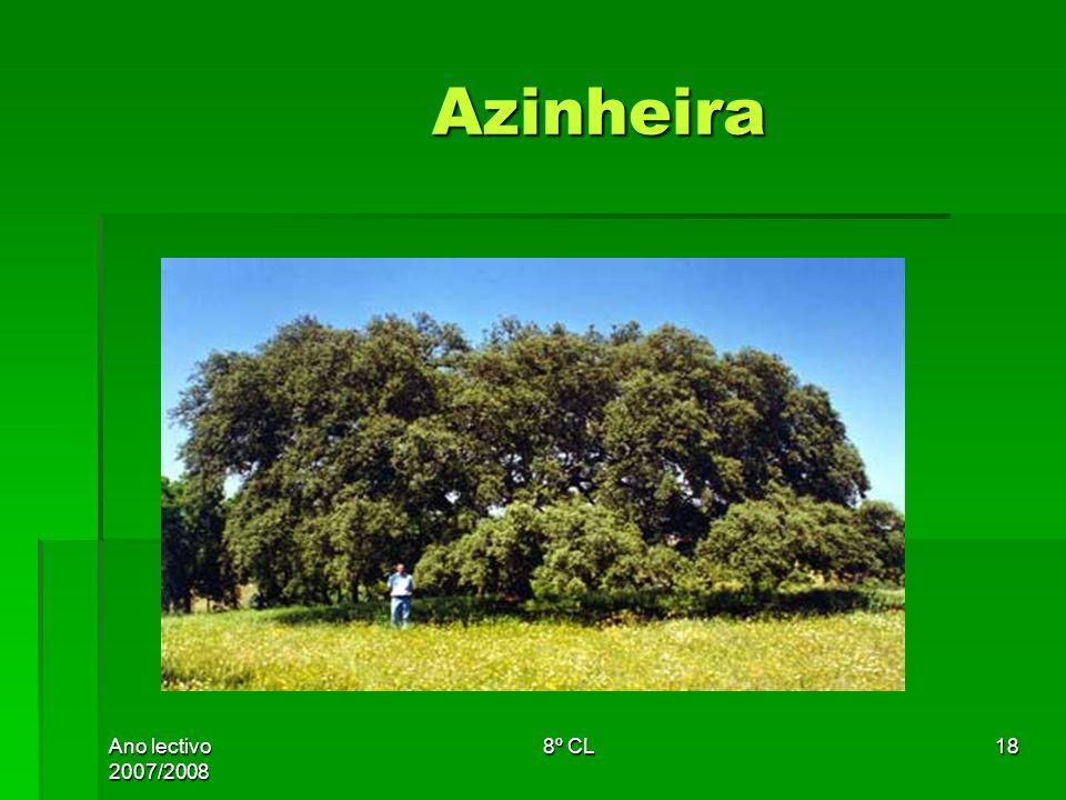 Ano lectivo 2007/2008 8º CL18 Azinheira Azinheira