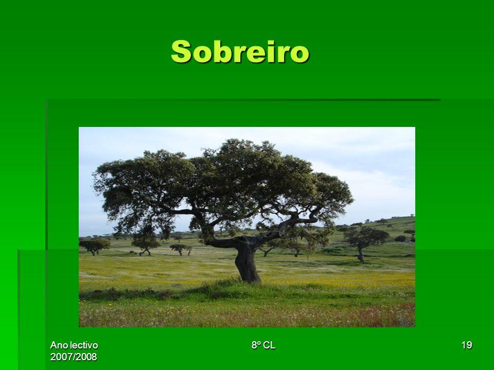 Ano lectivo 2007/2008 8º CL19 Sobreiro Sobreiro
