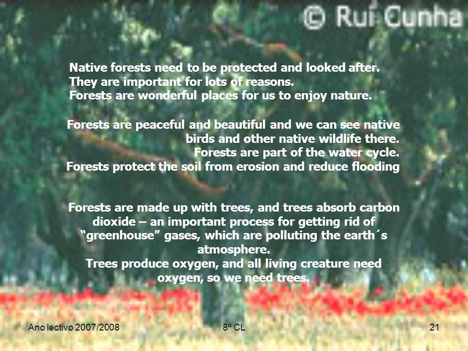 Ano lectivo 2007/20088º CL21 Native forests need to be protected and looked after. They are important for lots of reasons. Forests are wonderful place