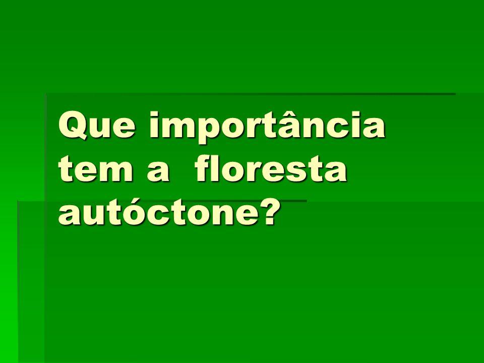 Qual é a importância da floresta autóctone?