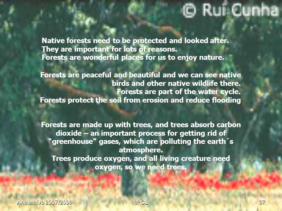 Ano lectivo 2007/20088º CL37 Native forests need to be protected and looked after. They are important for lots of reasons. Forests are wonderful place