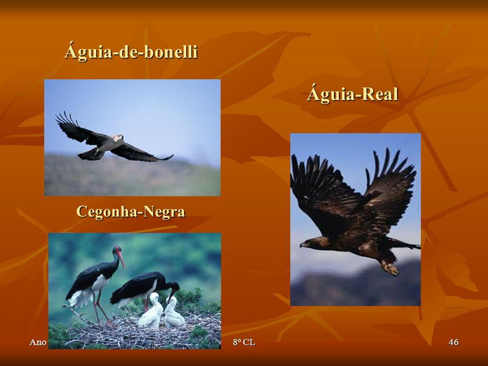 Ano lectivo 2007/20088º CL46 Águia-de-bonelli Águia-Real Cegonha-Negra