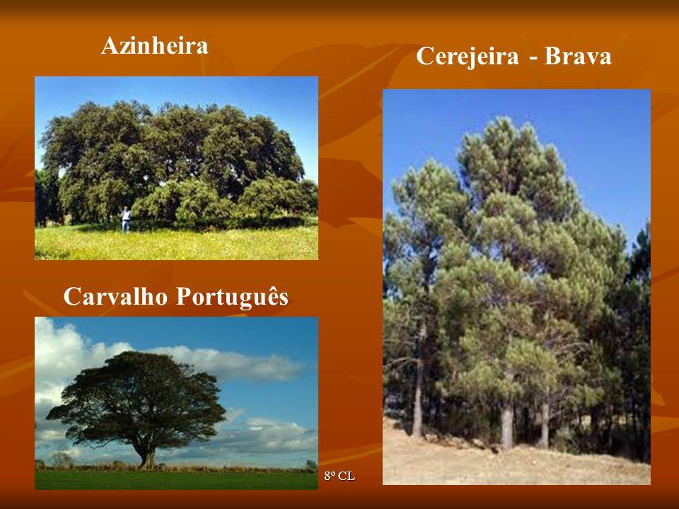 Ano lectivo 2007/20088º CL48 Azinheira Cerejeira - Brava Carvalho Português
