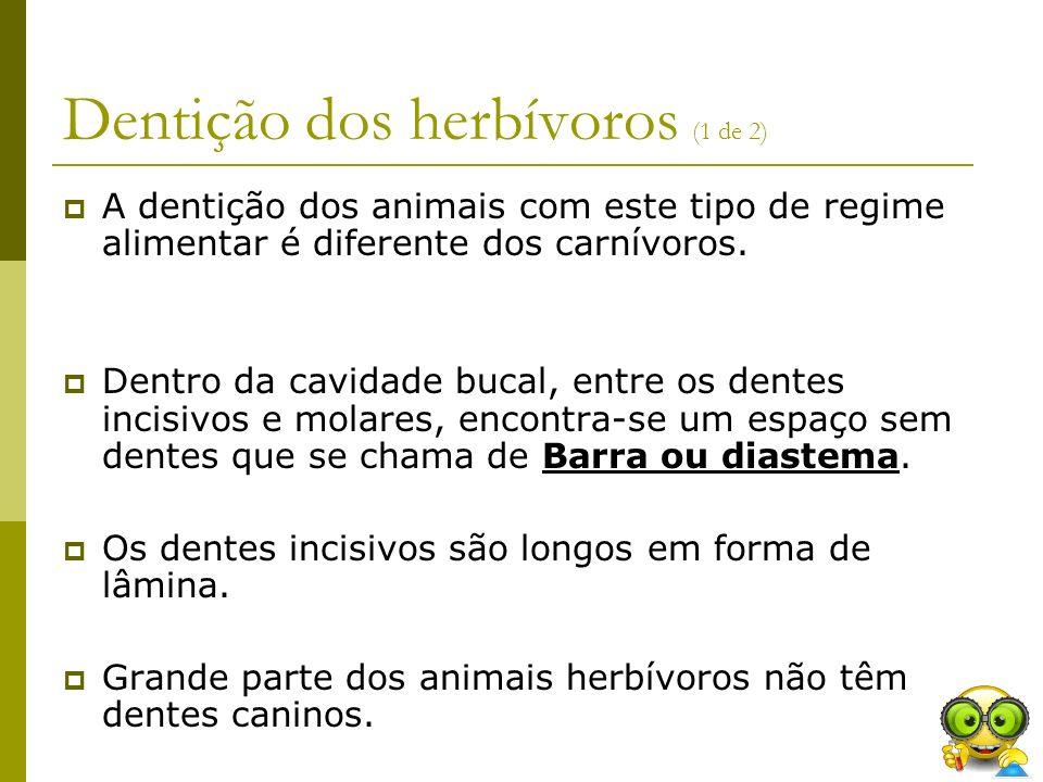 Dentição dos herbívoros (1 de 2) A dentição dos animais com este tipo de regime alimentar é diferente dos carnívoros. Dentro da cavidade bucal, entre