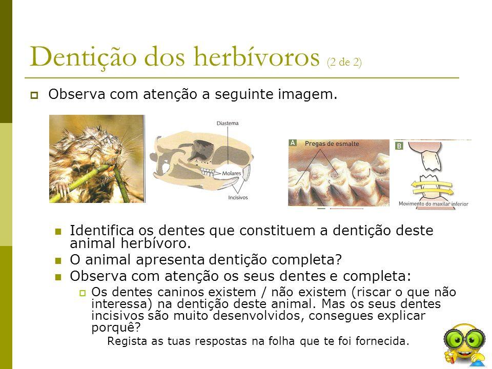 Dentição dos herbívoros (2 de 2) Observa com atenção a seguinte imagem. Identifica os dentes que constituem a dentição deste animal herbívoro. O anima