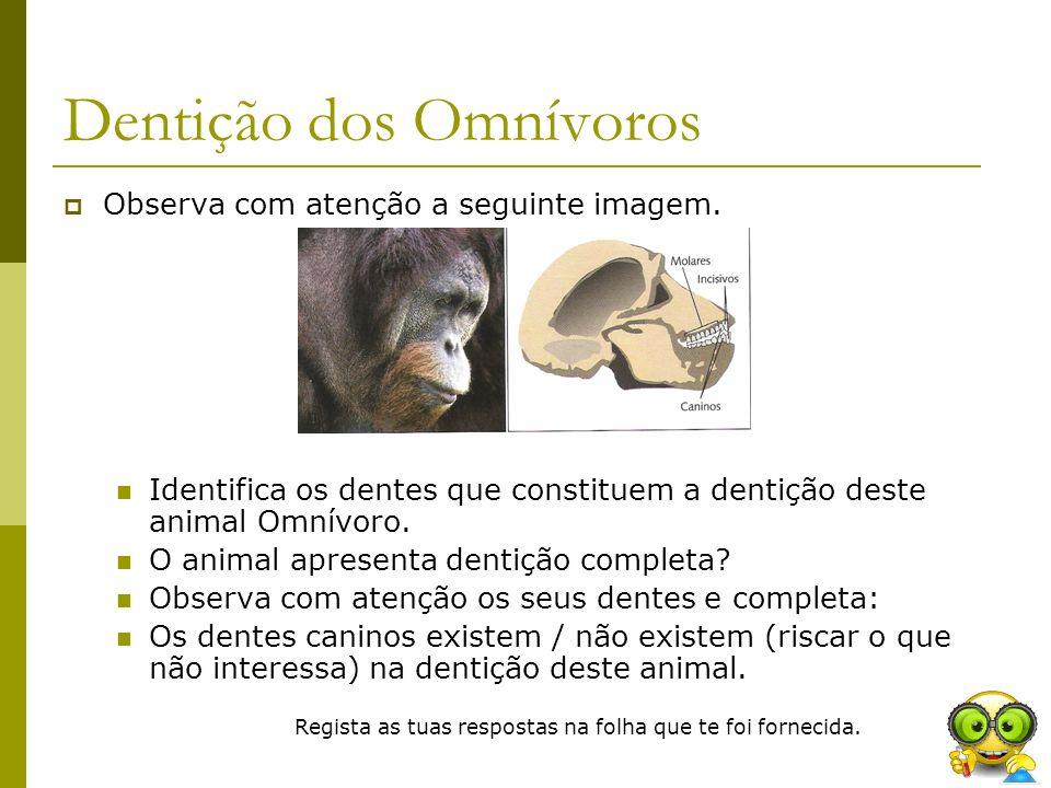Dentição dos Omnívoros Observa com atenção a seguinte imagem. Identifica os dentes que constituem a dentição deste animal Omnívoro. O animal apresenta