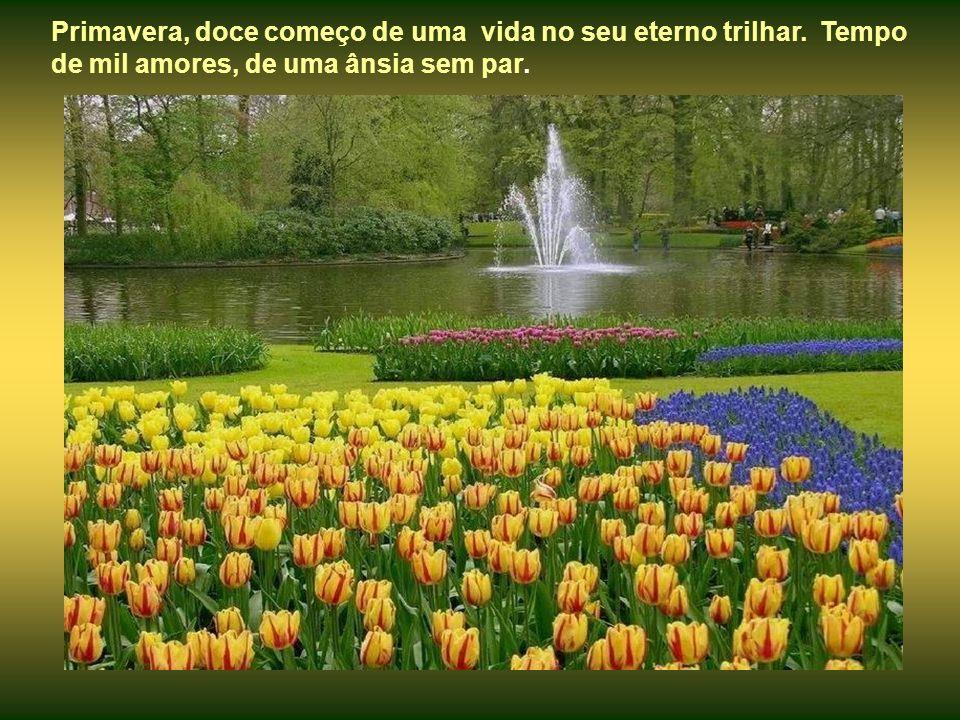 Primavera, doce começo de uma vida no seu eterno trilhar.