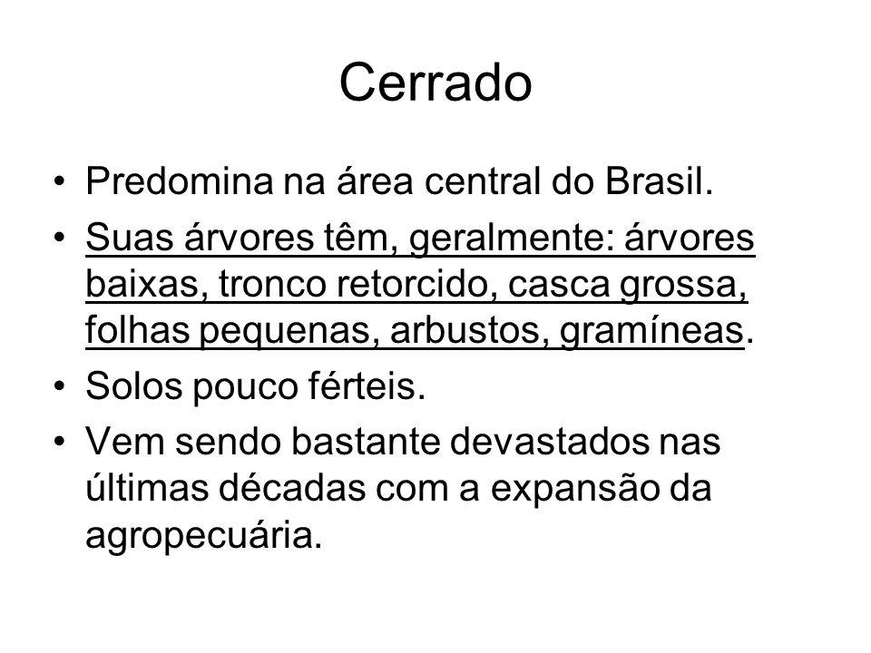 Cerrado Predomina na área central do Brasil. Suas árvores têm, geralmente: árvores baixas, tronco retorcido, casca grossa, folhas pequenas, arbustos,