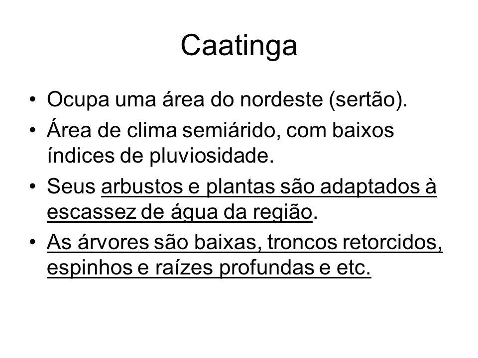 Caatinga Ocupa uma área do nordeste (sertão). Área de clima semiárido, com baixos índices de pluviosidade. Seus arbustos e plantas são adaptados à esc